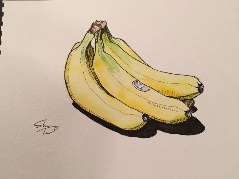 vector black and white stock Ink and watercolor art. Bananas drawing still life