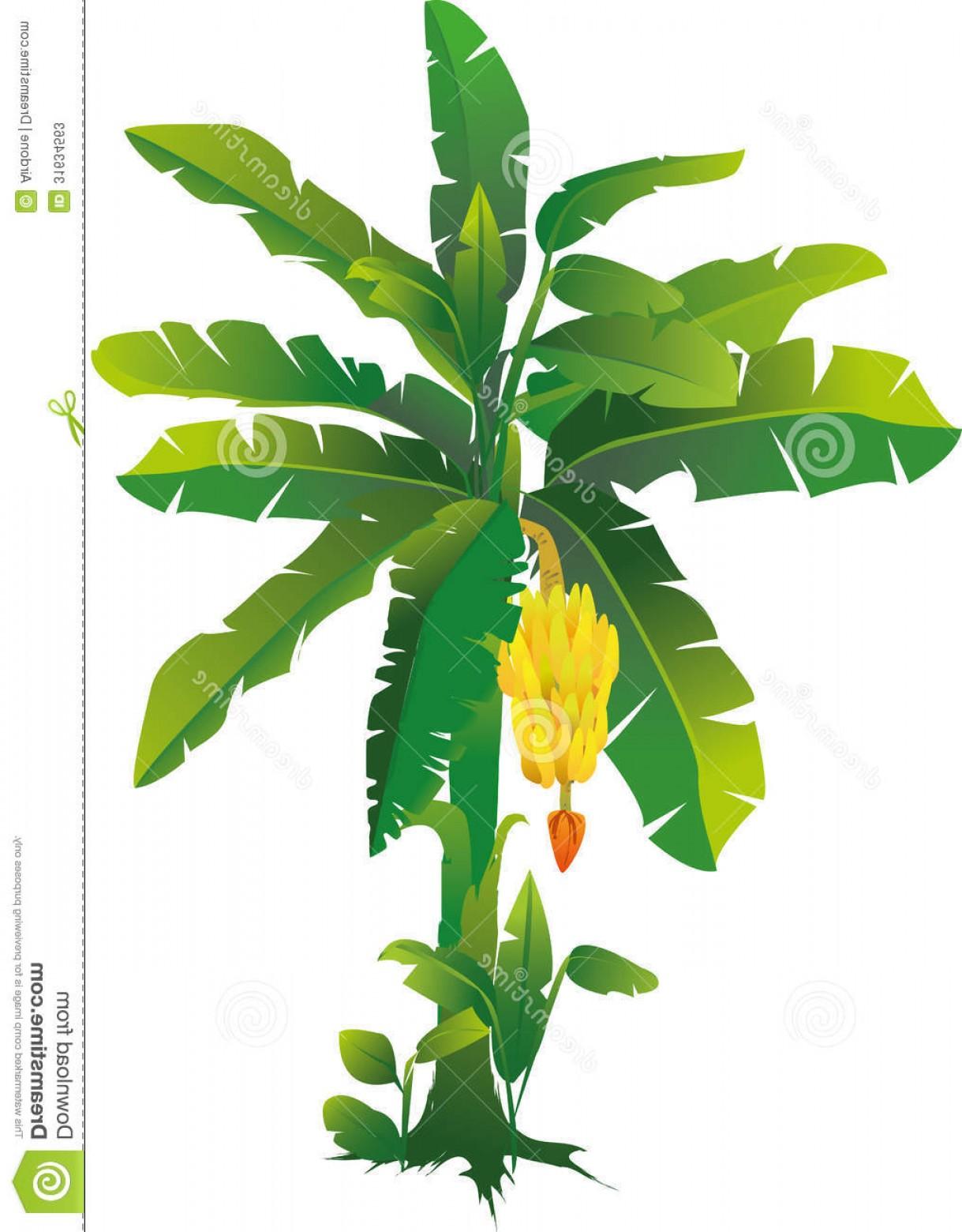 jpg freeuse Public domain soidergi . Bananas vector banana tree