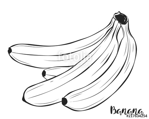 picture royalty free download Bananas vector black and white. Four painted in pencil