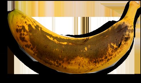 banner library download Australian bbq. Bananas vector cavendish