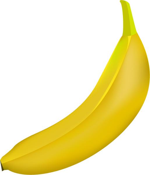 banner royalty free library Banana illustration free in. Bananas vector illustrator
