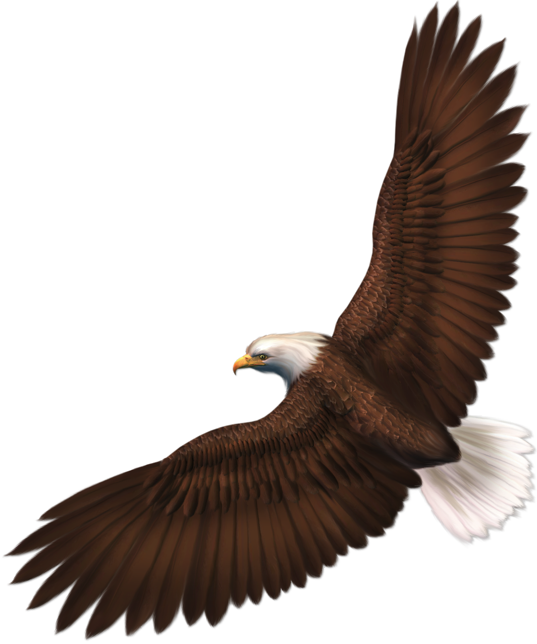 image transparent stock Gallery clipart eagel. Transparent eagle png picture.
