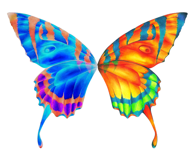 vector transparent stock News Butterfly