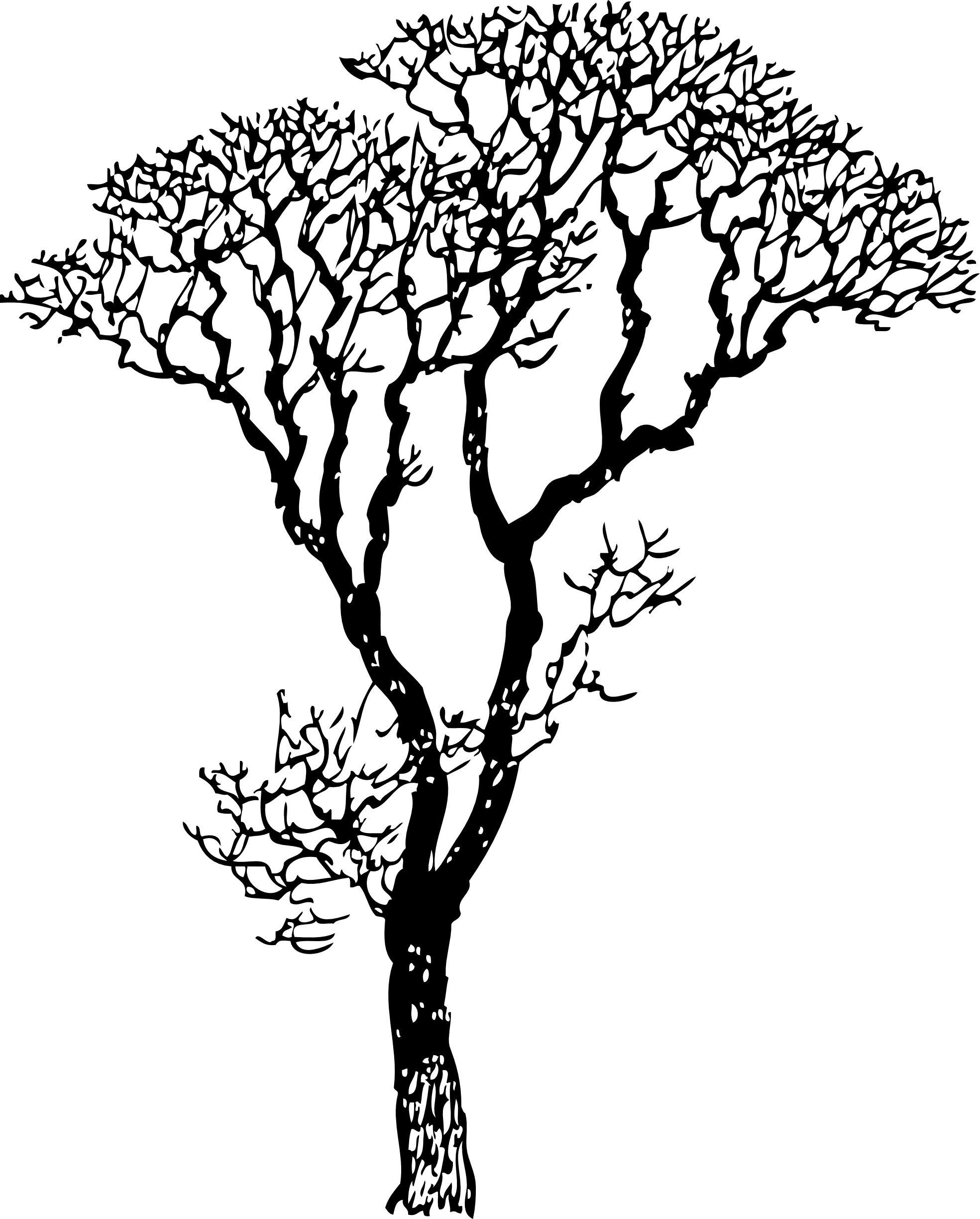 graphic Black and white tree of life clipart. Bare line art coloring.