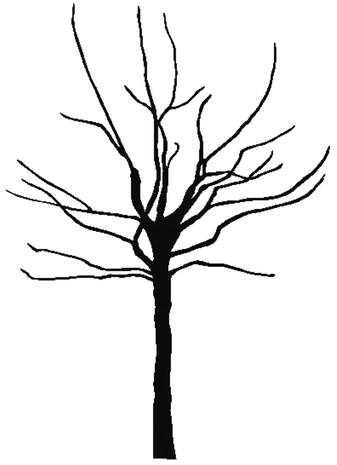 image transparent stock Tree free large images. Bare clipart leaves.