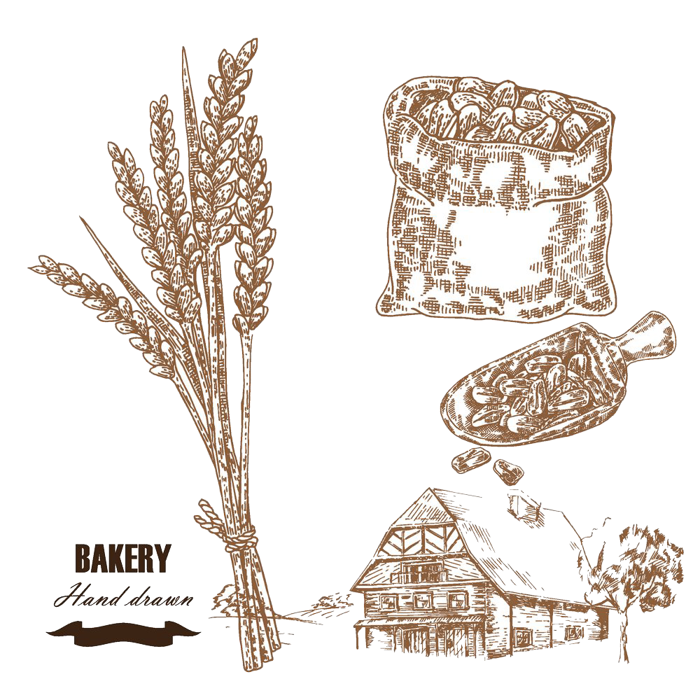 clip free download Wheat Drawing Cereal Illustration