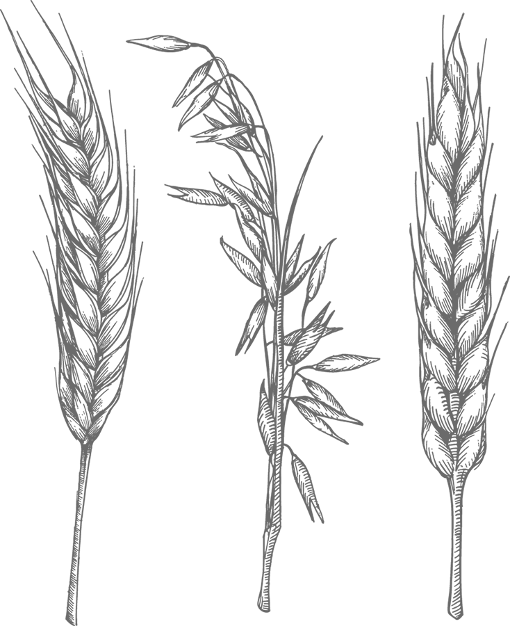 vector black and white library barley drawing rye #89907230