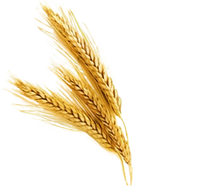 clipart library Barley prices closed lower by