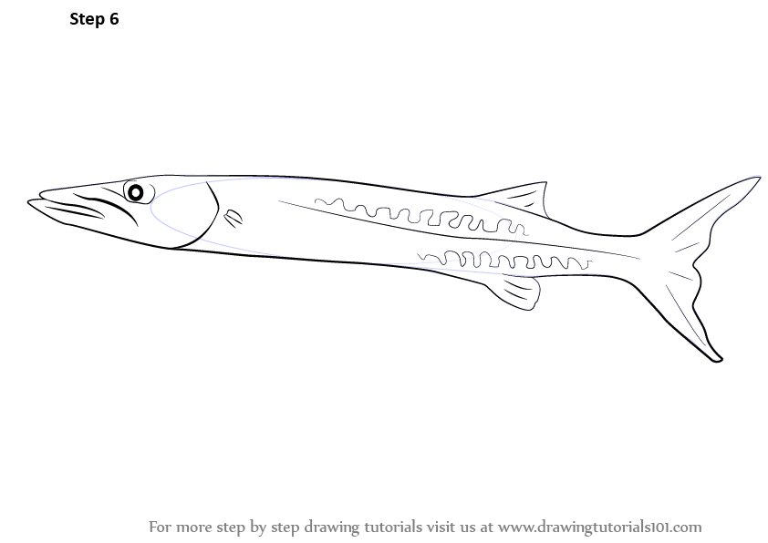 clipart royalty free download Barracuda drawing. Learn how to draw