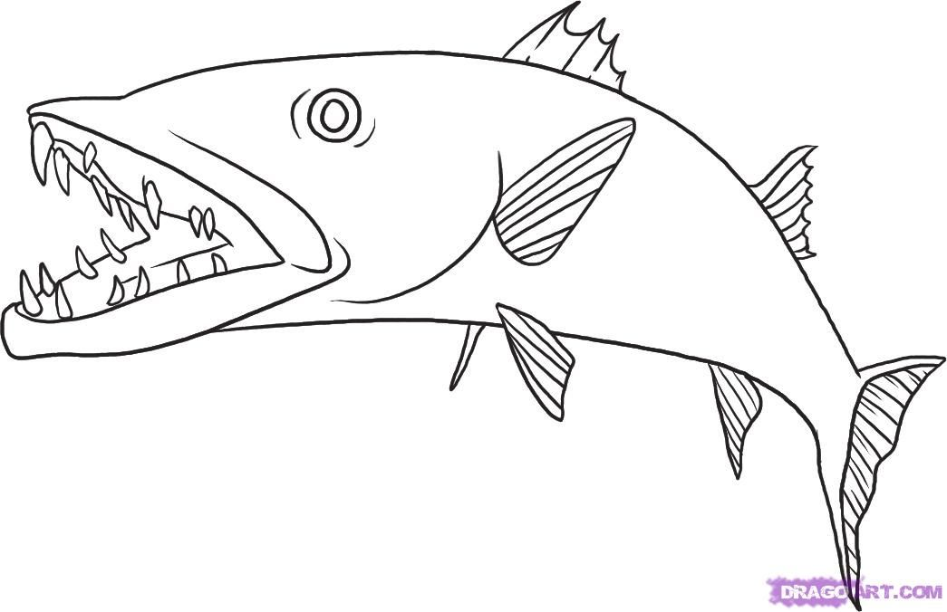 clipart royalty free stock Pin by daniel crudele. Barracuda drawing