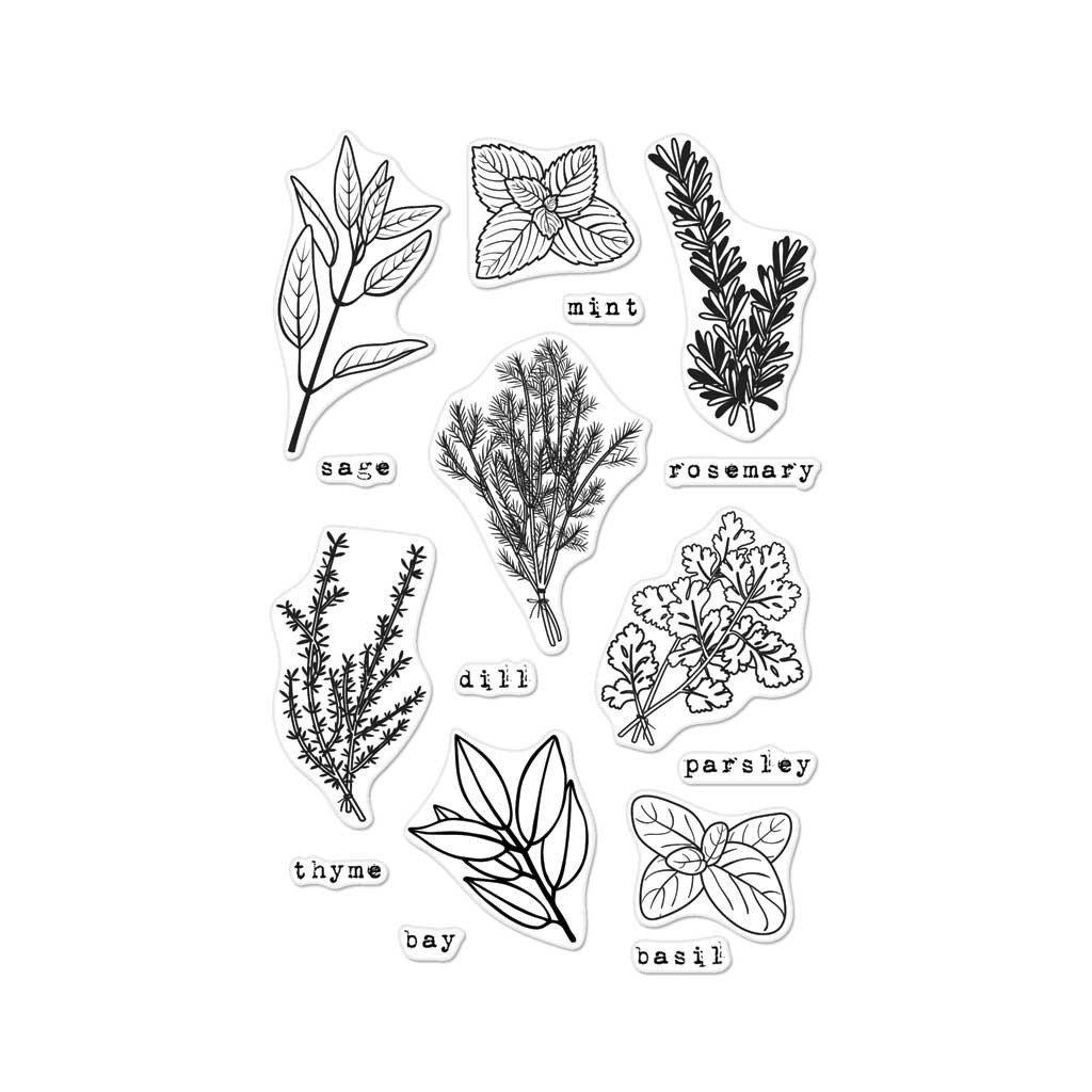 banner library download Basil drawing fresh herb. Cm herbs hero arts