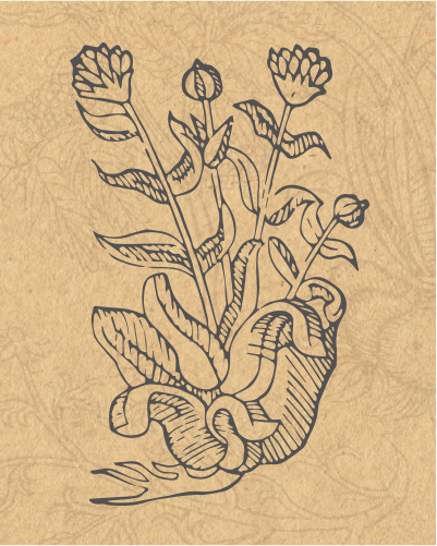 jpg freeuse Basil drawing fresh herb. Jean marie s garden