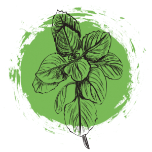 jpg free library By hand from the. Basil drawing oregano leaves