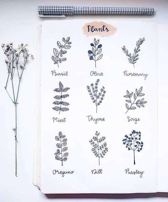 image royalty free download Basil drawing sage. Bullet journal plant ideas