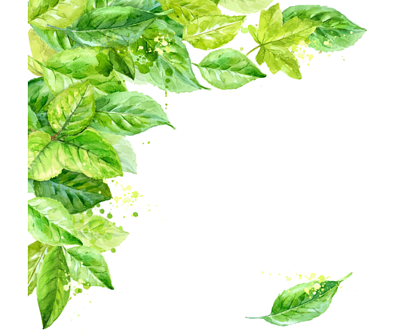 jpg royalty free download Collection of free transparent. Basil drawing two leave