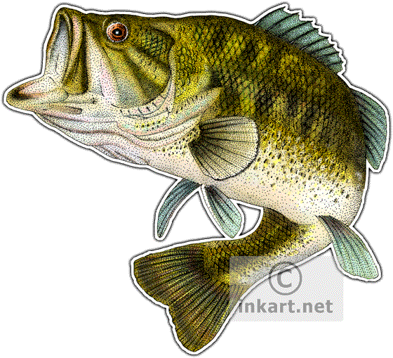 picture free library Largemouth drawing at getdrawings. Bass clipart freshwater fish.