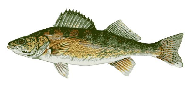 image royalty free Bass clipart freshwater fish. Great clip art of.