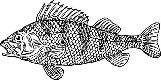picture transparent library Water cartoon bass illustration. Fish tank clipart black and white