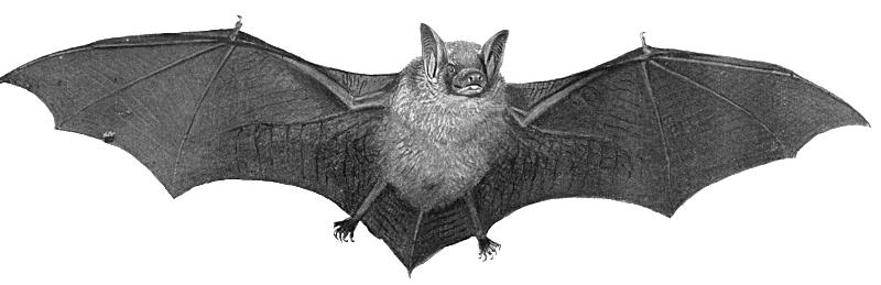 clipart transparent library Transparent bat. Free real life clip