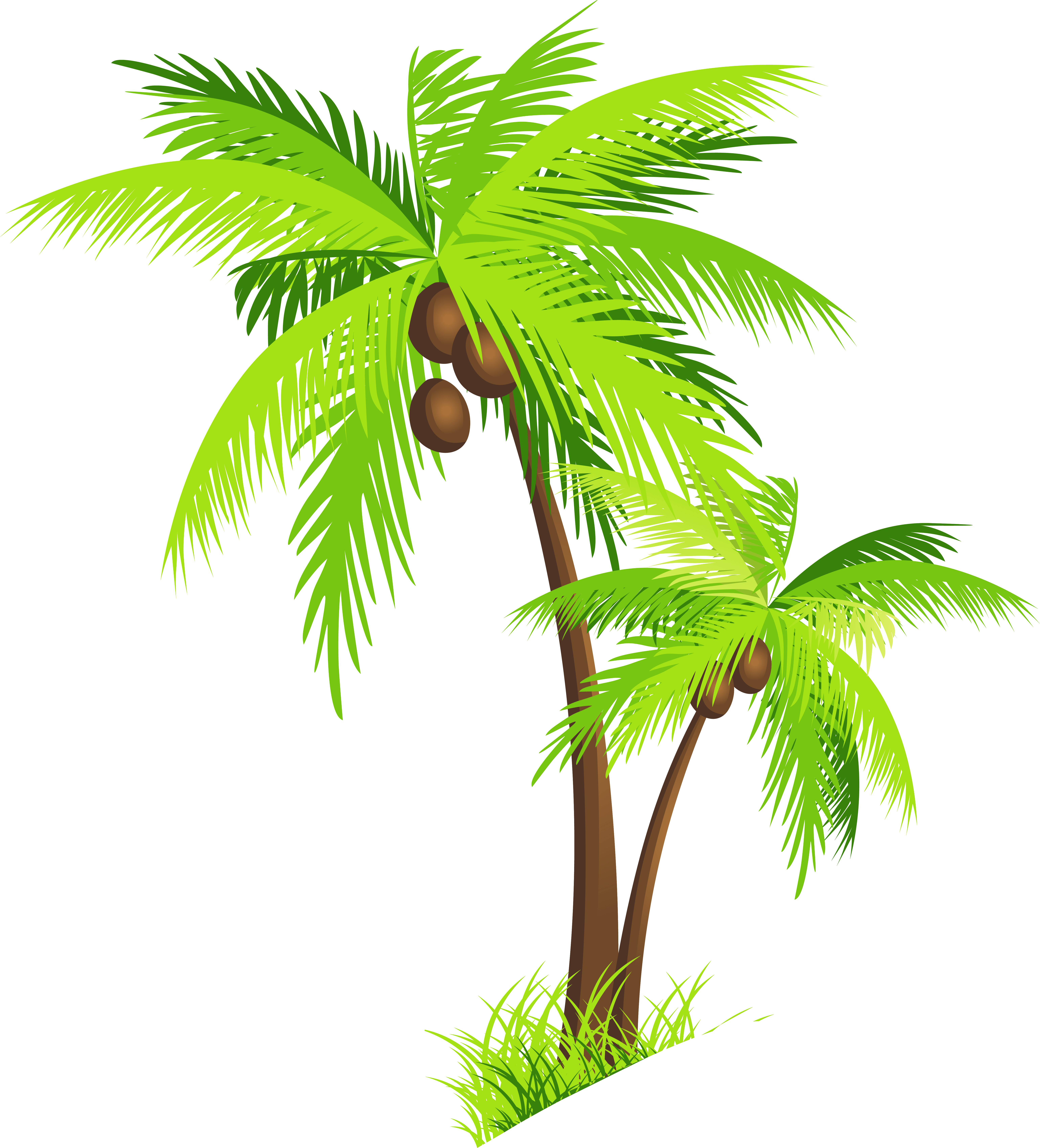 clipart black and white Png piante alberi pinterest. Beach clipart coconut tree.
