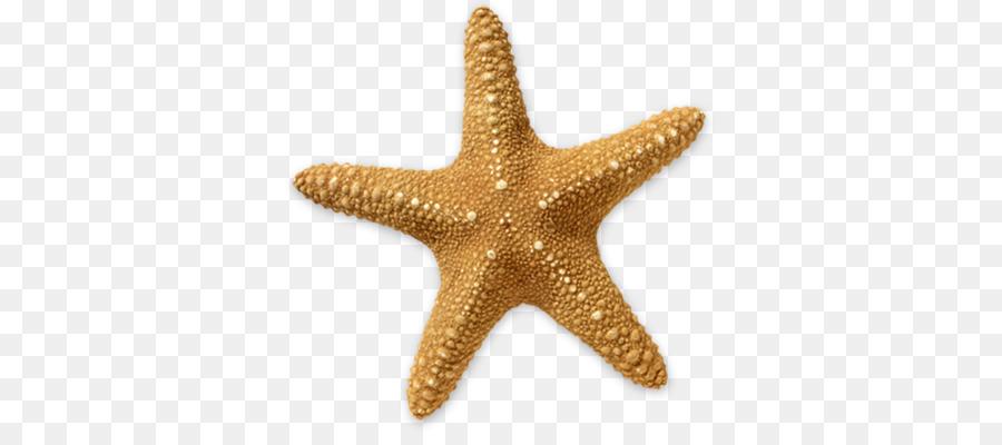 clip black and white stock Beach transparent starfish. Cartoon clipart clip art
