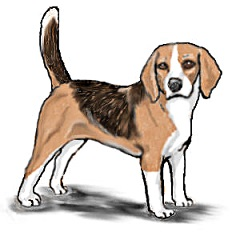 freeuse library Free cliparts download clip. Beagle clipart