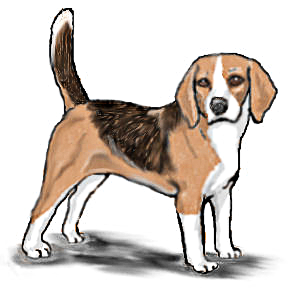 image stock Standing animals dogs b. Beagle clipart