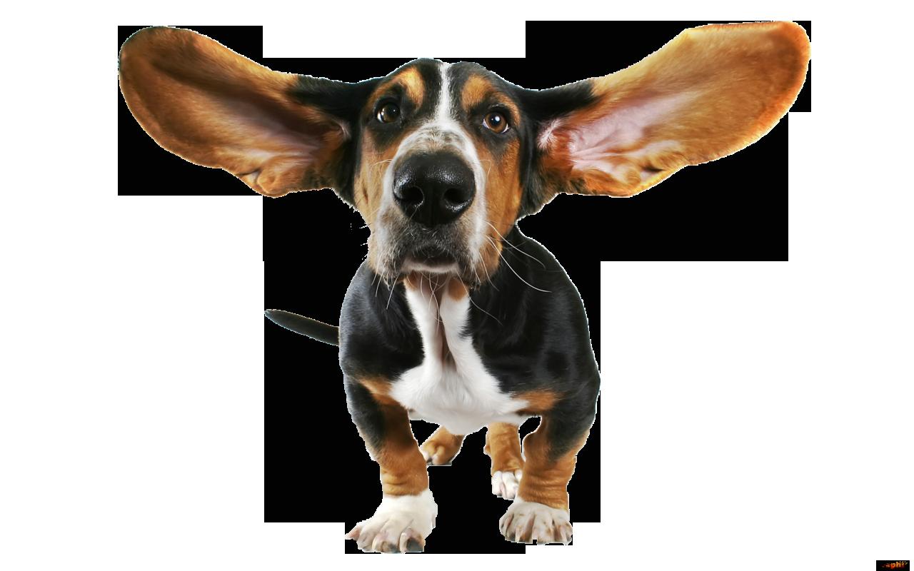 jpg transparent download Funny animal clipart. Dog transparent png mjggjg