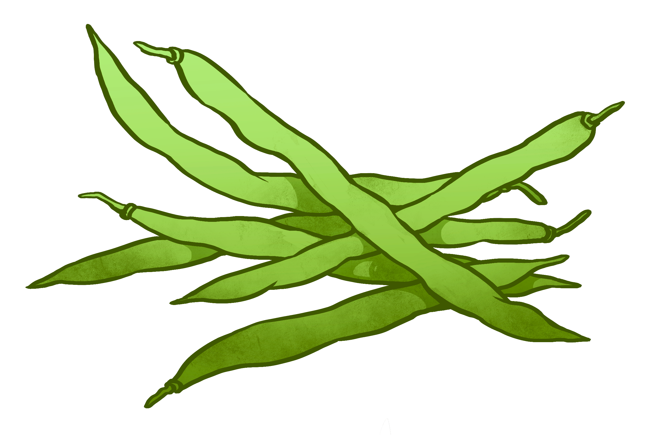 image stock Bean drawing. String beans at getdrawings