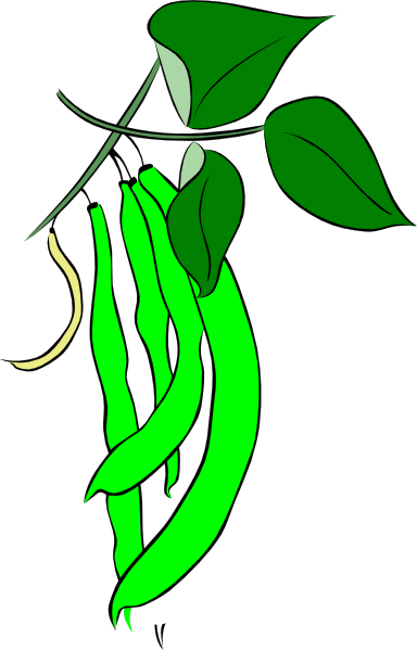 jpg royalty free download Plant free . Bean clipart.