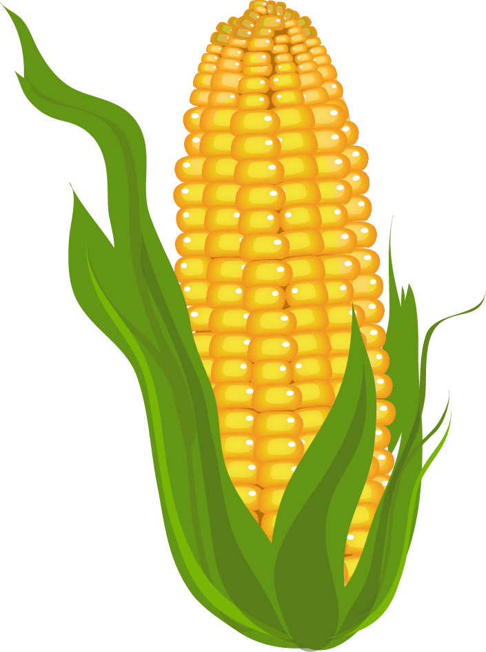 graphic freeuse stock Beet drawing corn. Clipart prints pictures and