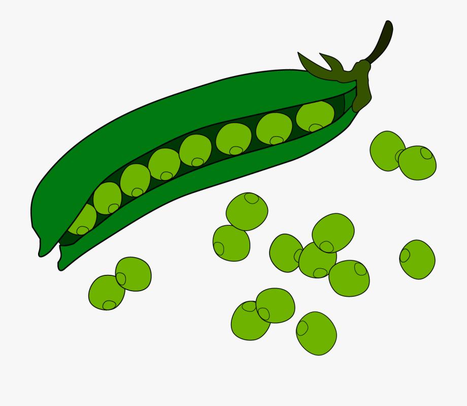 stock Beans clipart. Pea fruit clip art.