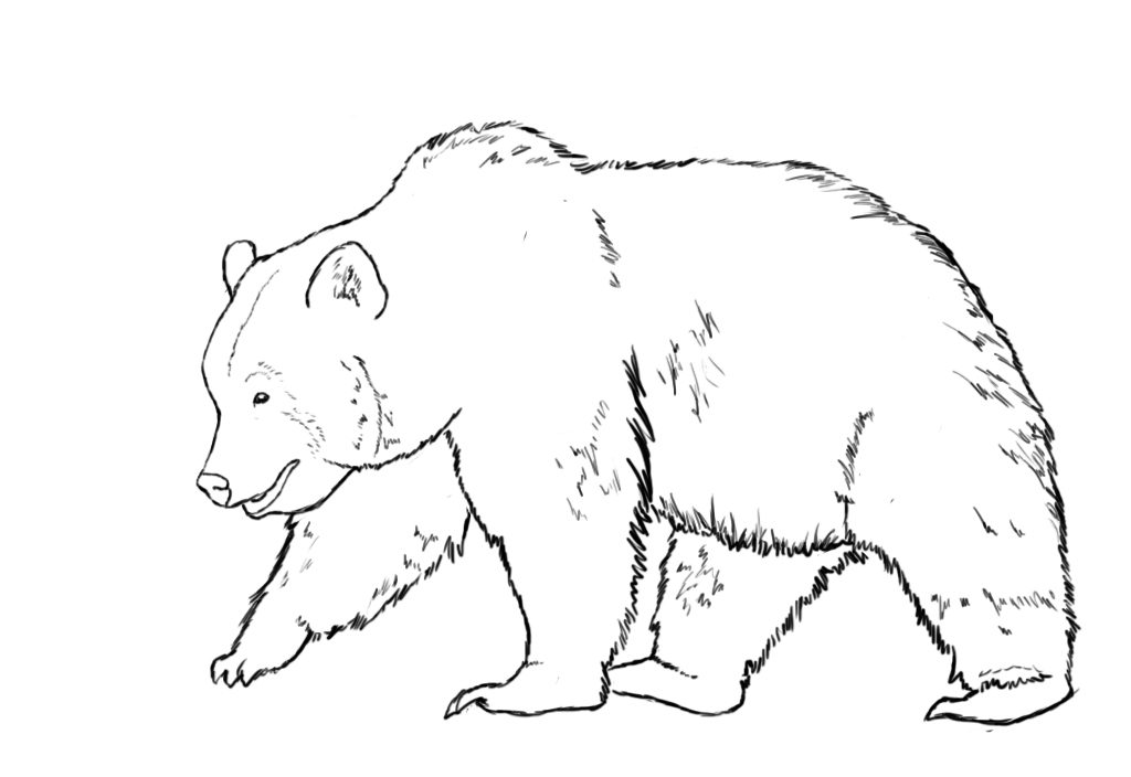 clipart download Bear clipart black and white. Grizzly station