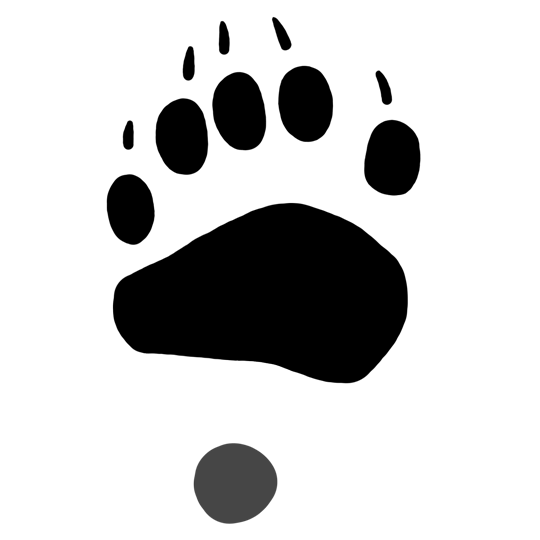 graphic transparent Pictures black prints drawings. Bear tracks clipart