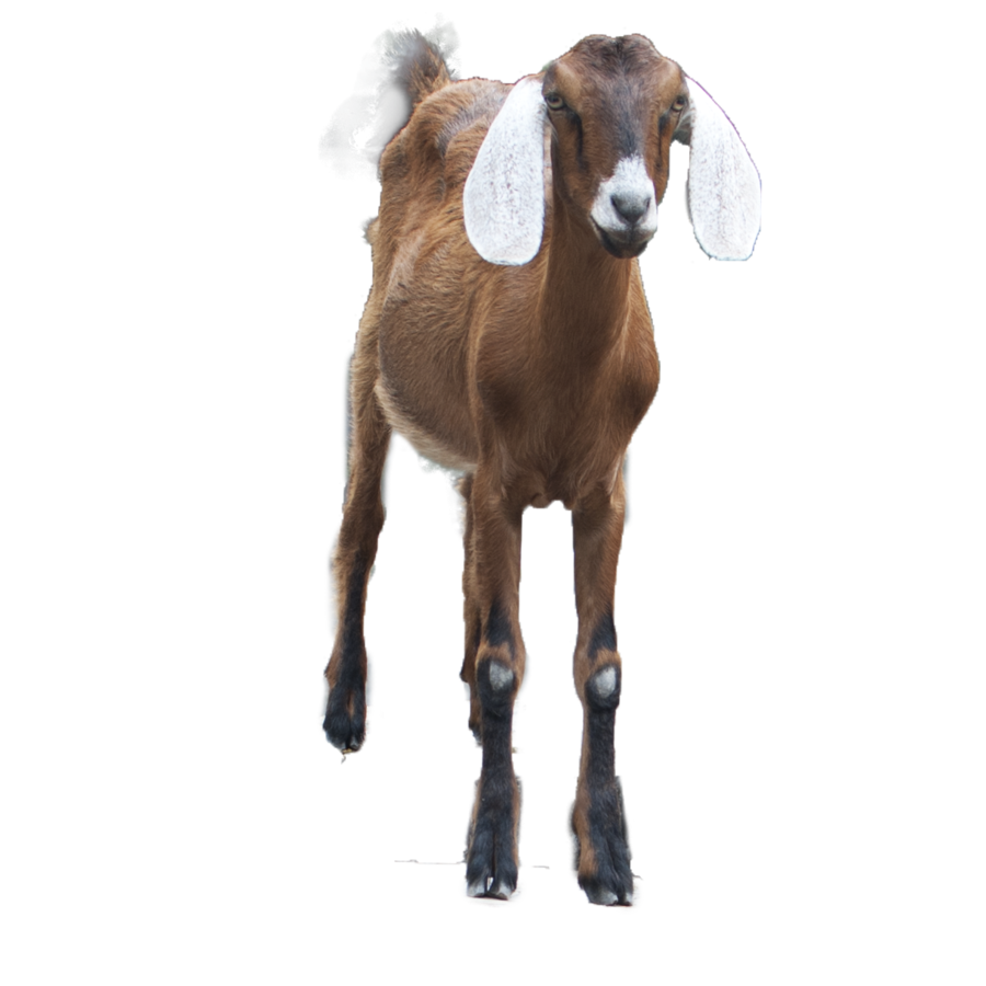 clipart stock Brown png image purepng. Beard clipart goat