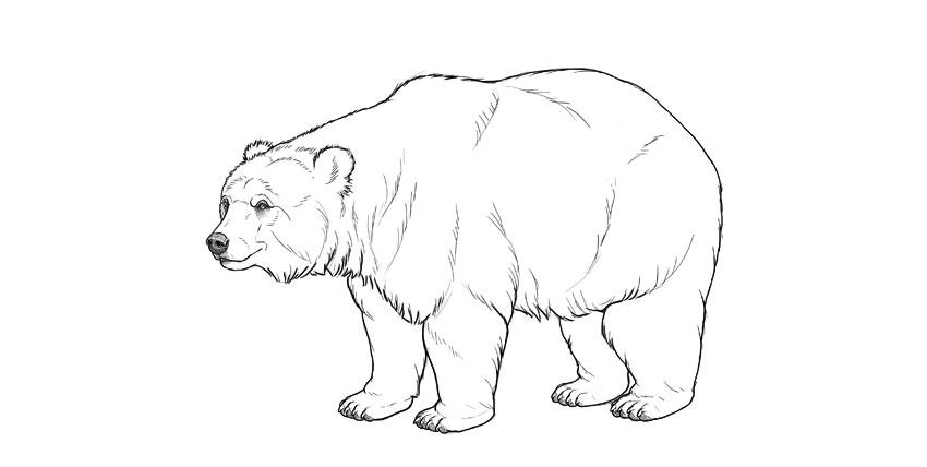 picture freeuse stock Bears drawing. How to draw a