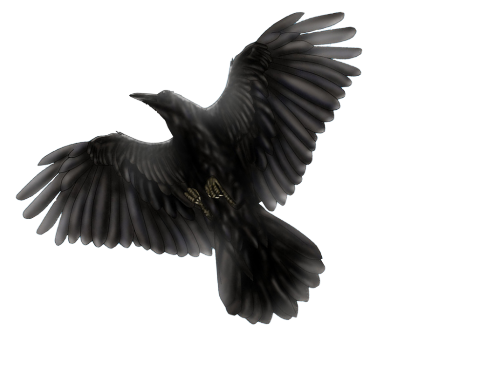 graphic stock Blackbird drawing flying. Pin by jadessa williams