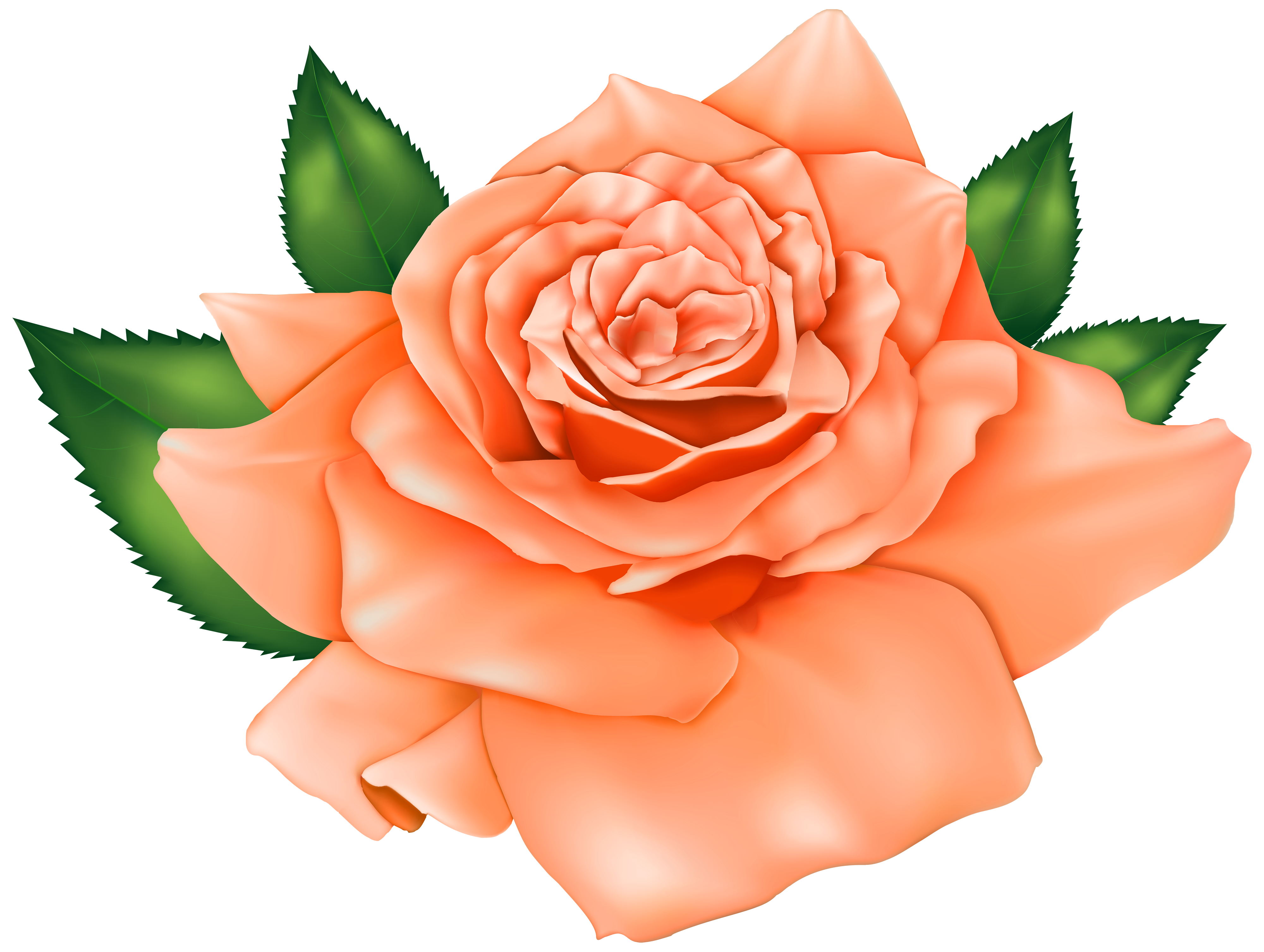 clip freeuse stock Orange rose png best. Beautiful clipart