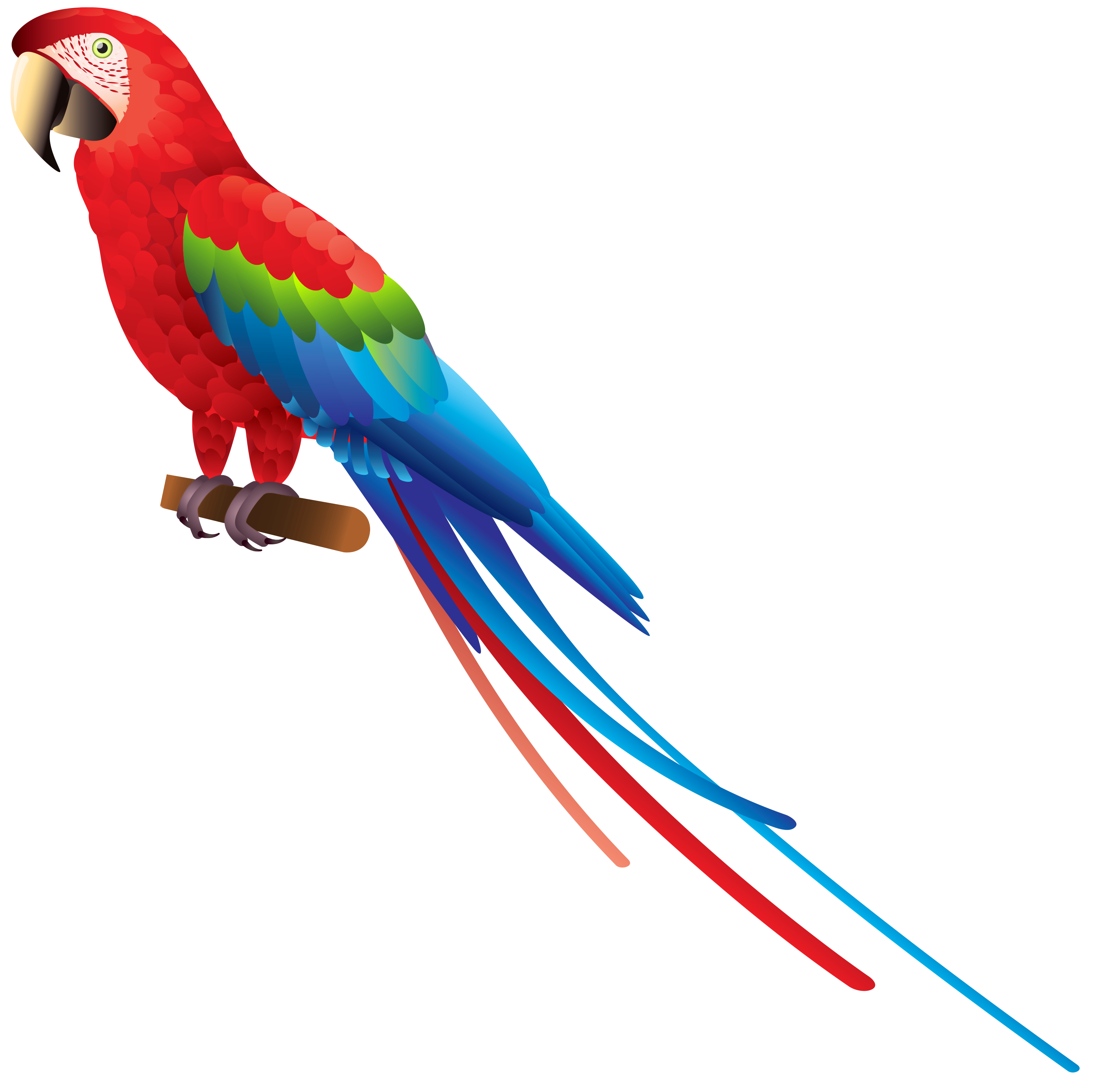 picture royalty free Parrot PNG Clipart