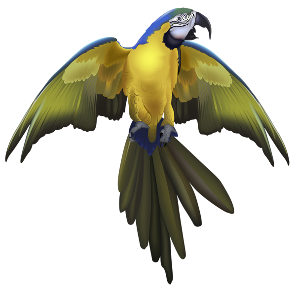 svg transparent download Large png picture animals. Beautiful clipart beautiful parrot