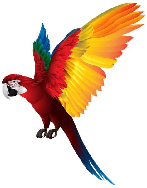 vector library stock Beautiful clipart beautiful parrot. Png transparent clip art