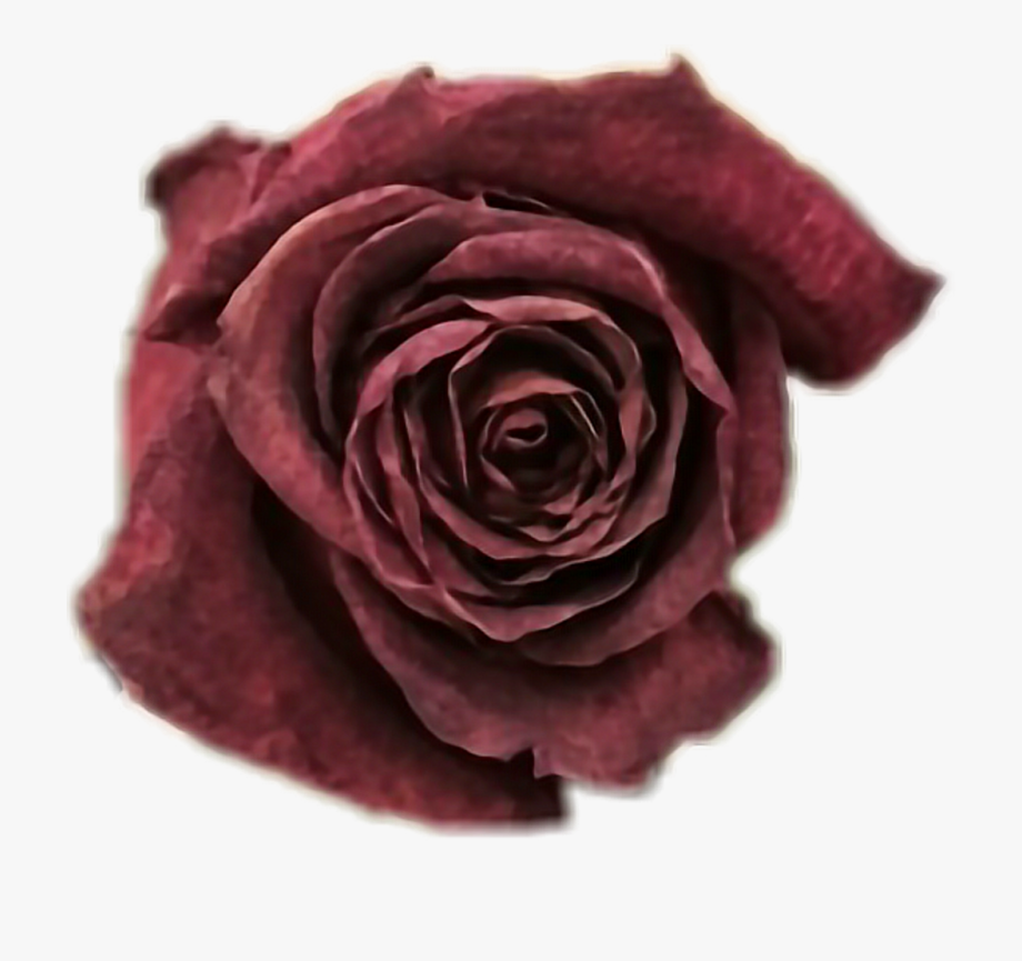 svg royalty free download Beautiful clipart dead rose. Download free with a.