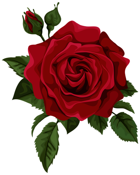 clipart royalty free library Red with bud transparent. Beautiful clipart dead rose.