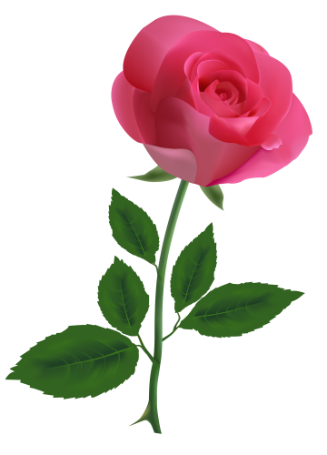 vector transparent Beautiful clipart dead rose. Pink png image flowers.