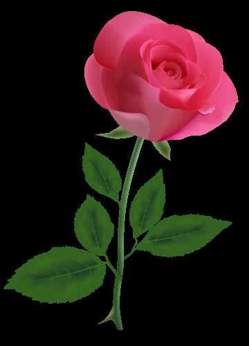 png transparent download Pink roses clipart. Rose png image flowers.