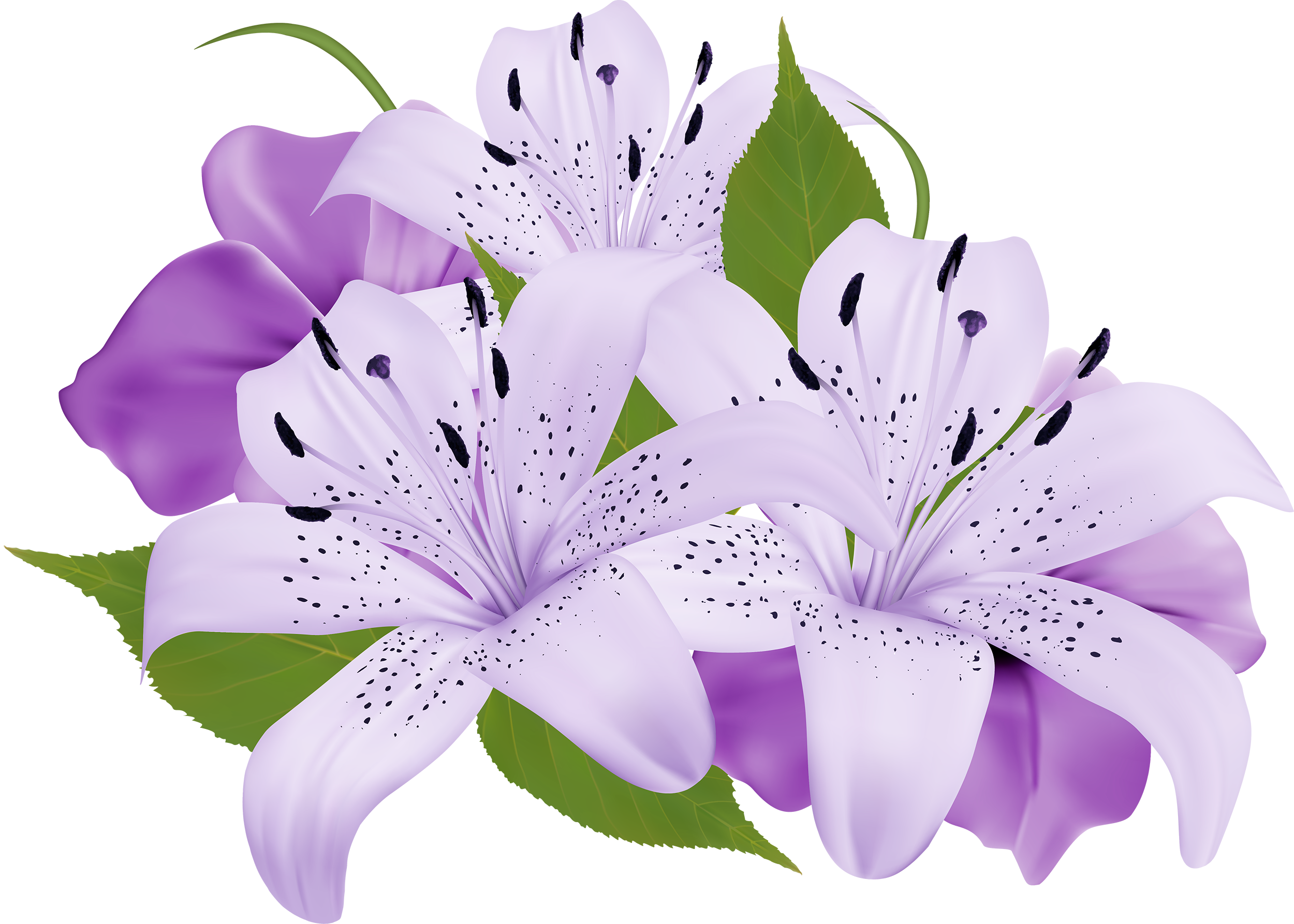 image black and white download Purple decorative flowers png. Violet clipart vase