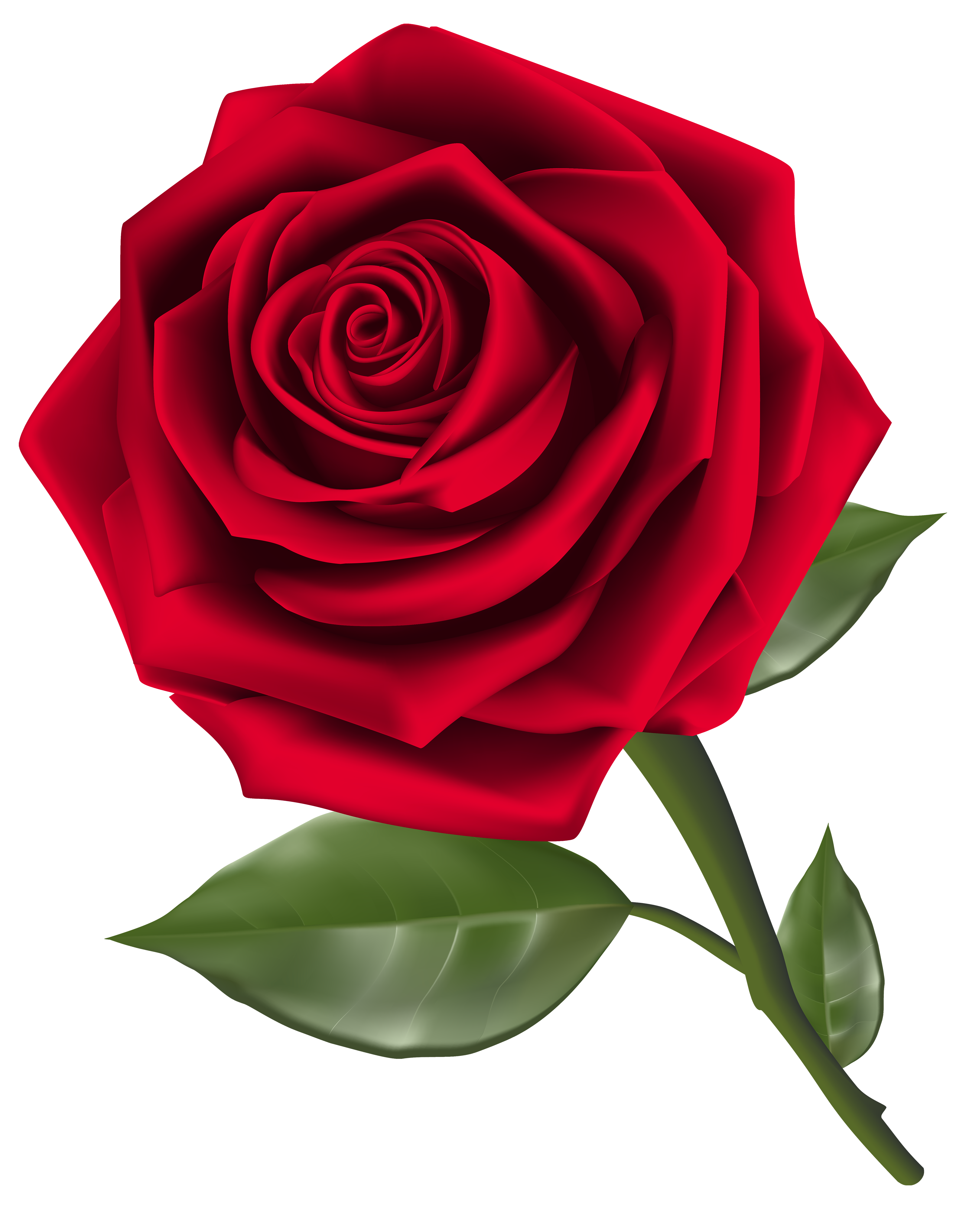 clipart royalty free Beautiful red png best. Rose flower clipart