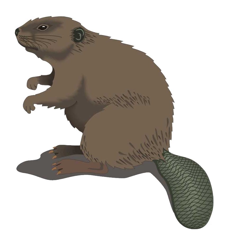 vector stock Groundhog clipart otter. Beaver free on dumielauxepices