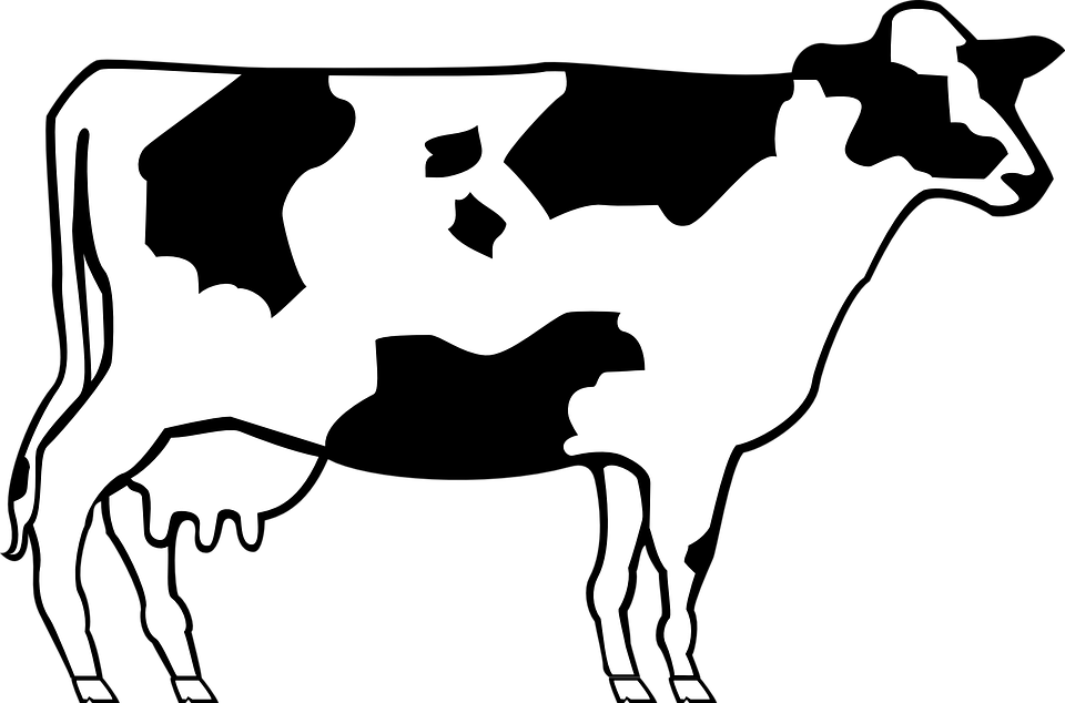 clip art royalty free download Beef free on dumielauxepices. Cow clipart black and white