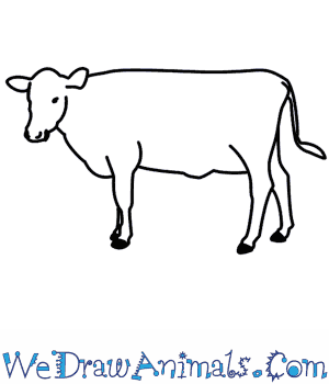 clipart royalty free library How to draw a. Beef drawing cattle